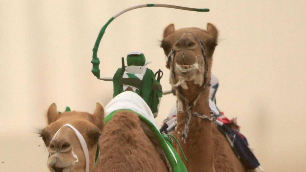 Robot-Camel-Racing