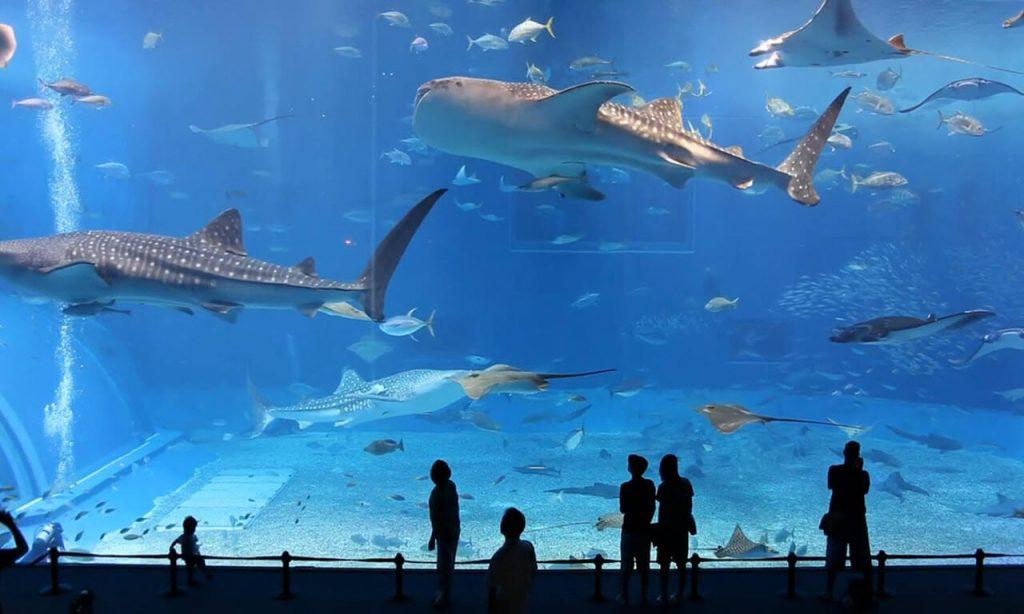 The-Dubai-Aquarium